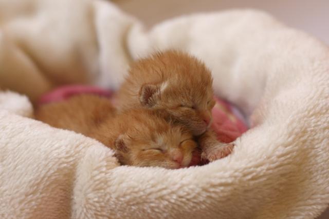赤ちゃん猫 昼寝