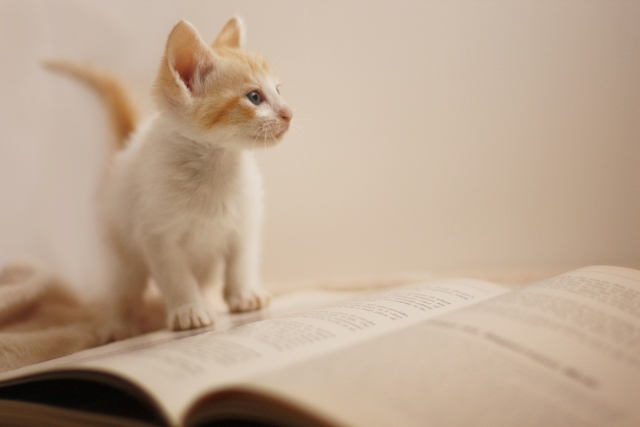 猫の体の仕組みを知って、健康状態のサインをチェック!