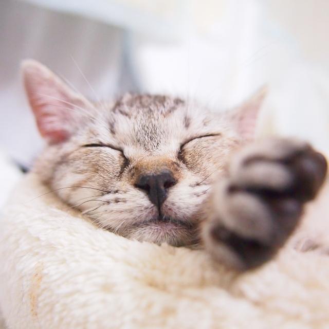 猫をとろけさせる極楽マッサージ法!猫マッサージのすすめ