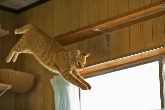 猫が夜中に大運動会する理由は?ハンティング行動について