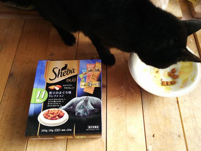 シーバキャットフード評判「猫がシーバしか食べない!」口コミ体験談
