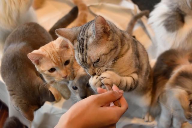 有害添加物から猫を守る!無添加キャットフードランキング!