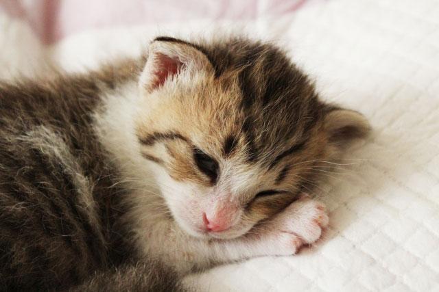 猫が食物アレルギーになった!正しい対策は?キャットフード選び方。