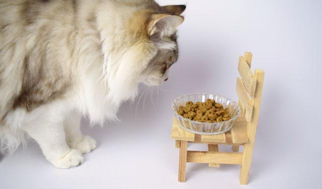 猫がキャットフードを食べない!原因は?食欲不振の対処方法