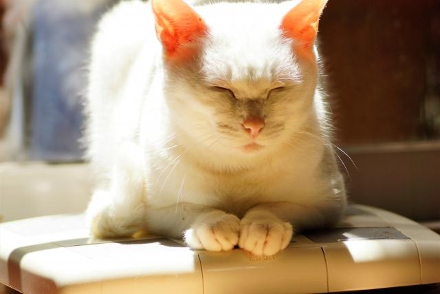 高齢のシニア猫キャットフードランキング!7歳からおすすめはコレ!