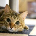 猫 キャットフード