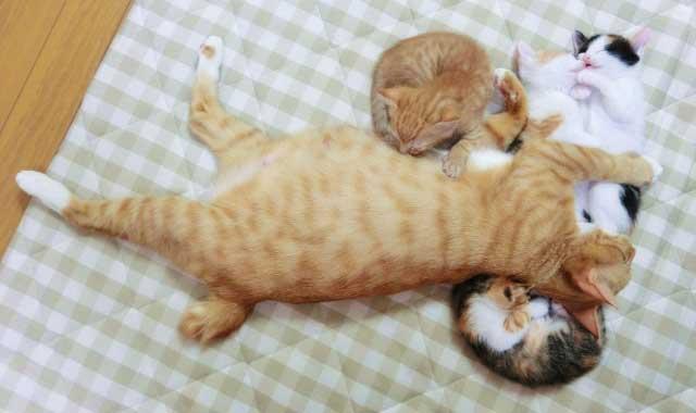 子猫 母親
